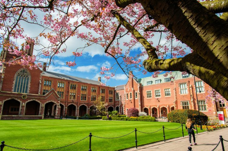 Cherry Blossoms in the Quad in spring