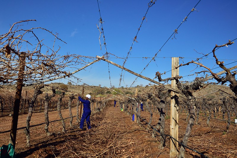 How South African wineland workers used global networks to fight for their rights