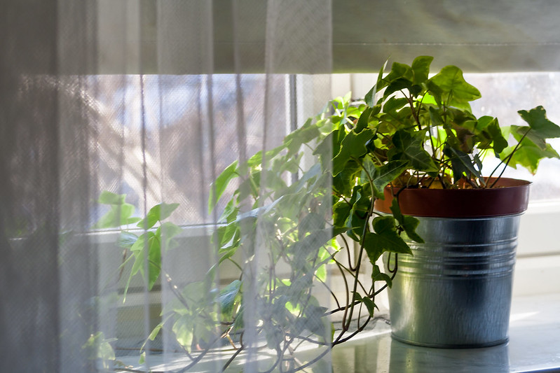 House plants were our link with nature in lockdown – now they could change how we relate to the natural world